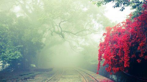 Fog on a Rail Line (Pexels)